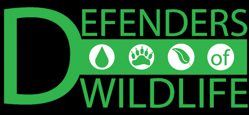 Defenders of Wildlife is dedicated to the protection of all native animals and plants in their natural communities.  Founded in 1947, Defenders of Wildlife is the premier U.S.-based national conservation organization dedicated to the protection and restoration of imperiled species and their habitats in North America.   Defenders' approach is direct and straightforward – We protect and restore imperiled species throughout North America by transforming policies and institutions and by promoting innovative solutions. We speak with one voice informed by scientific, legal and policy expertise, hands-on wildlife management experience and effective advocacy.
