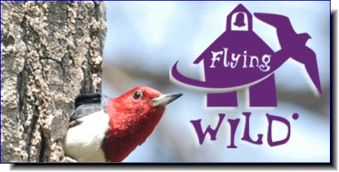 Flying Wild | Using birds to engage youth in science