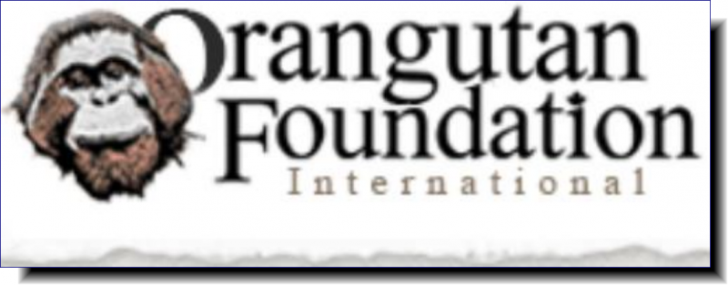 Orangutan Foundation | Help us in our Mission to save orangutans and their habitat