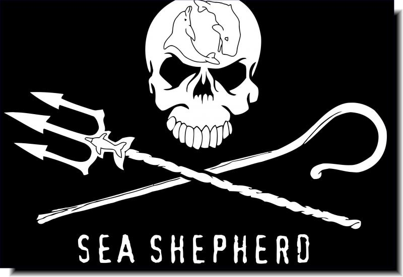 Sea Shepherd | Join our direct action crew and support our campaigns to defend ocean wildlife.